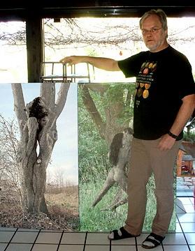 Wolf Tekook und zwei seiner Baummotive als große Leinwand-Drucke